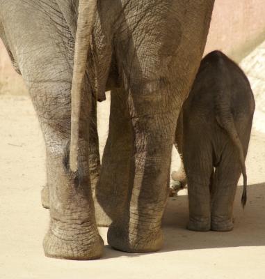 Mutter- und Babyelefant
